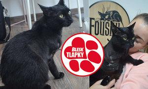 Třínohá kočka Bety našla díky Blesk tlapkám nový domov. Nová rodina kvůli ní urazila 450 kilometrů