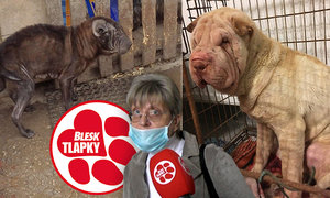 Její psi umírali hlady, vyvázla s podmínkou. Chovat zvířata ale může dál