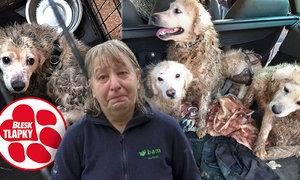 Psy držely zavřené a množily je, štěňata prodávaly na sociálních sítích. Budou potrestány podle nového zákona?