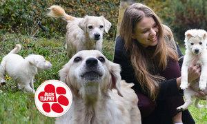 Chelsea a její štěně Deny se zotavují v dočasné péči. Stihne majitele množírny, ze které pocházejí, přísný trest?