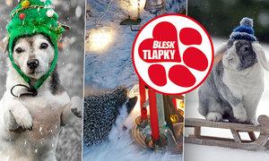 Vítězem vánoční soutěže je ježek Romeo a jeho Andělské zvonění. Cenu získává i fenka Bubu a králík Majlík