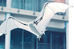 Robot měl za úkol prozkoumat mechaniku létání bez peří