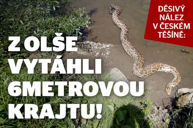 Děsivý nález: Z Olše vytáhli šestimetrovou krajtu!
