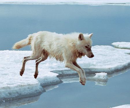 Nový kožich na zimu - Jak se převlékají zvířata  a5cd43757a